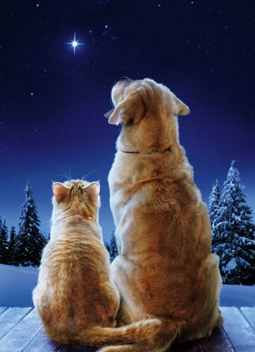 a Christmas miracle cat christmas card - A cat and a dog staring at the sky at Christmas eve