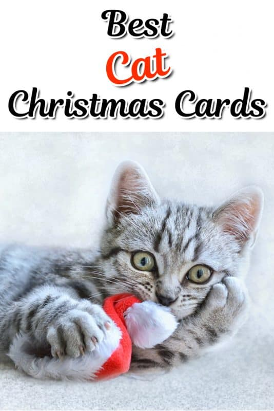 Kitten Christmas Cards.10 Cute And Funny Cat Christmas Cards Absolute Christmas