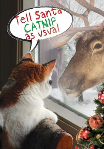 I want catnip Cat Christmas card