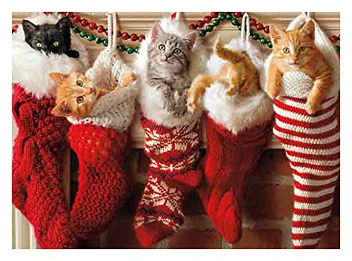 Image result for cat christmas