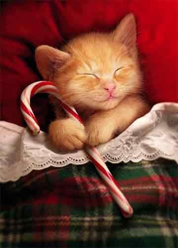 Sweet Kitty Christmas Dreams cards