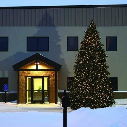 23.5 ft Grand Teton Pine Featuring 12,700 Multi Color LED Lights - Commercial Artificial Christmas trees