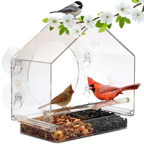 Large Window Bird Feeder with suction cups