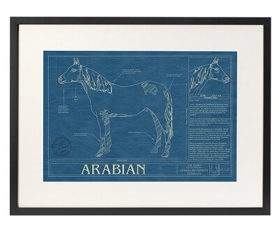 Horse Blueprint - Gifts for Horse Lovers