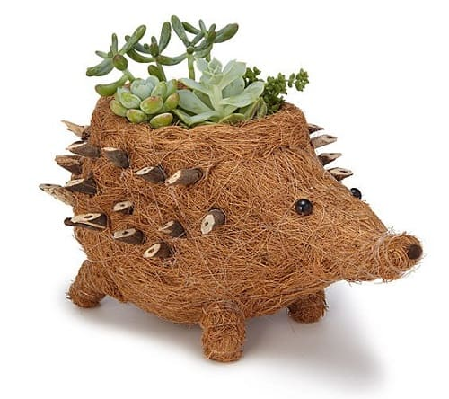 Coconut Fiber Hedgehog Planter