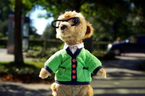 Meerkat Gift Ideas - Gifts for Meerkat Lovers