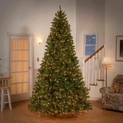 9 ft. Norwood Fir Christmas Tree with Lights