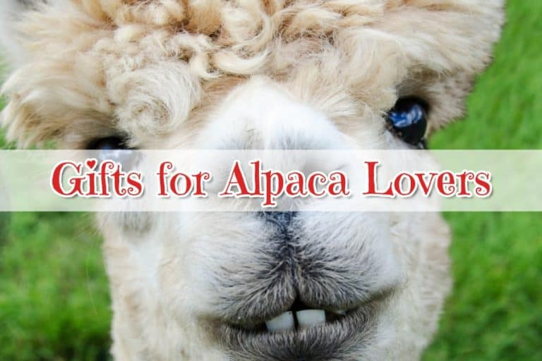 Gifts for Alpaca Lovers