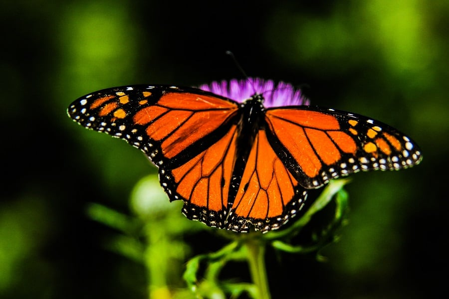 Gifts for Butterfly Lovers   Cool Butterfly Gifts