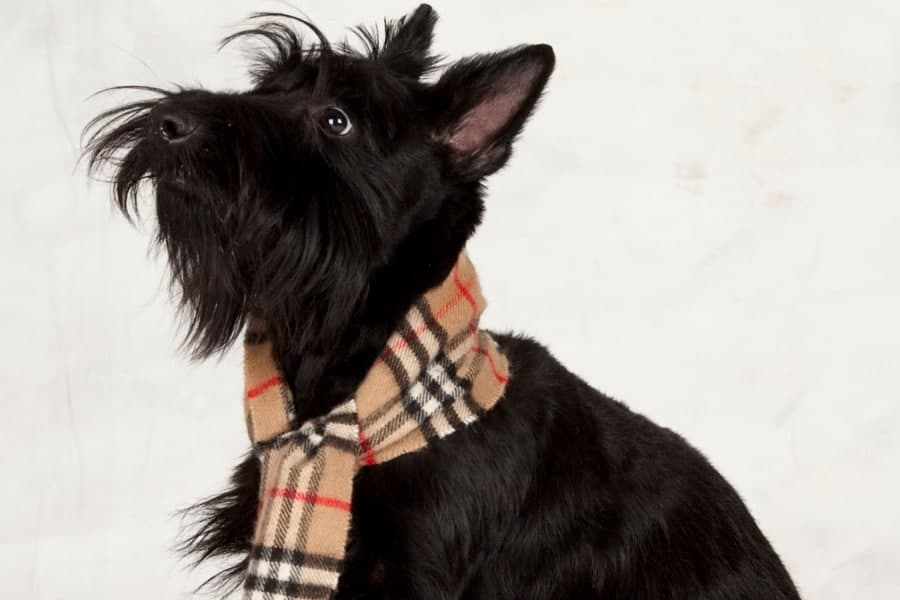 Gifts for Scottie Dog Lovers - Scottish terrier themed gifts