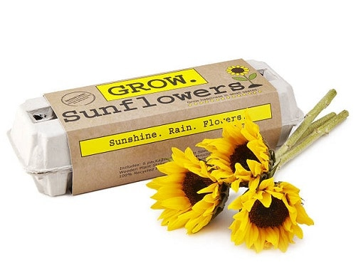 Sunflower Garden Grow Kit - Sunflower Gifts