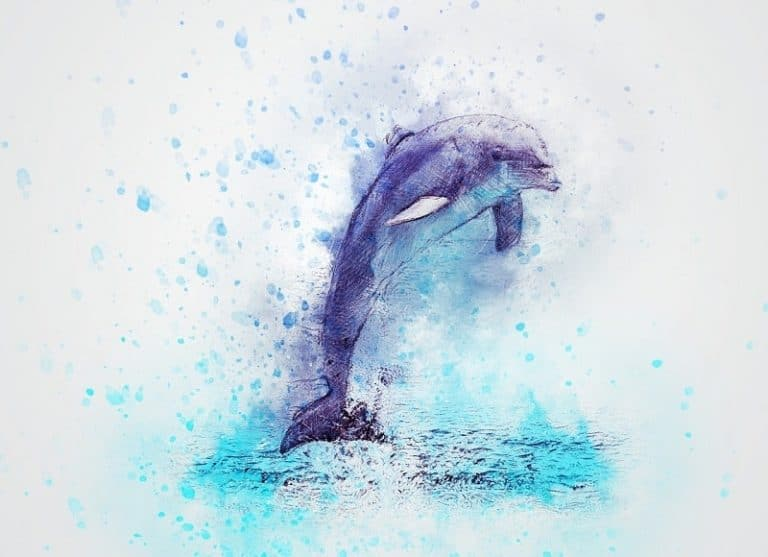 Gifts for Dolphin Lovers