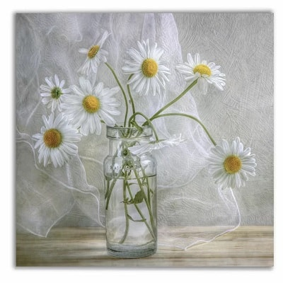 Daisies Oil Painting Print