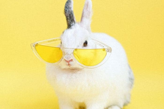 Bunny Gifts - Gifts for Rabbit Lovers