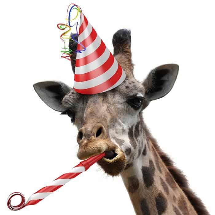 Giraffe Gifts - gifts for giraffe lovers
