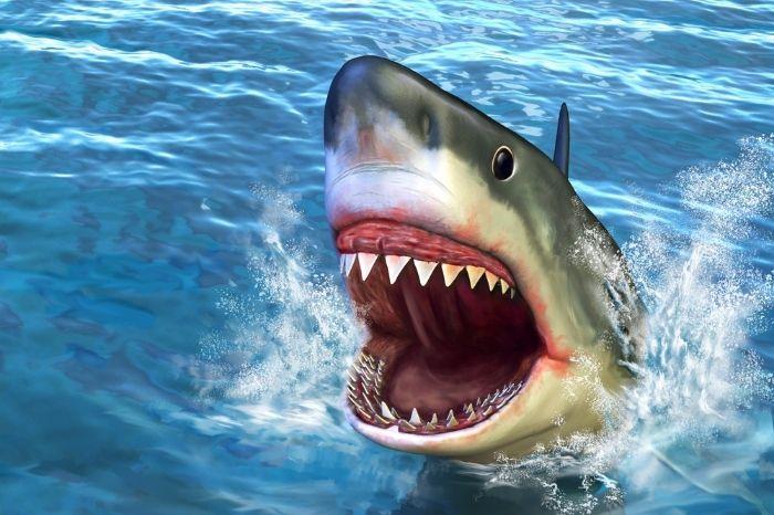 Shark Gifts