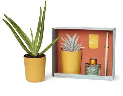 Soothing Aloe Gift Set